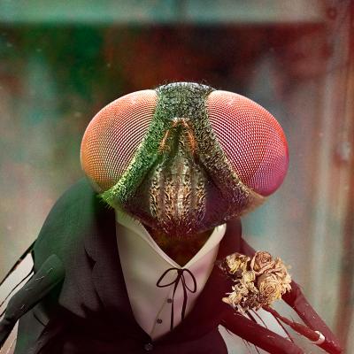 mosca-600dpi